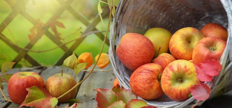 Erntedank - Äpfel auf Bank