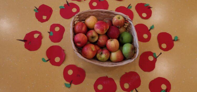 KiTa Schwabsburg - Projekte der Kinder: Apfel